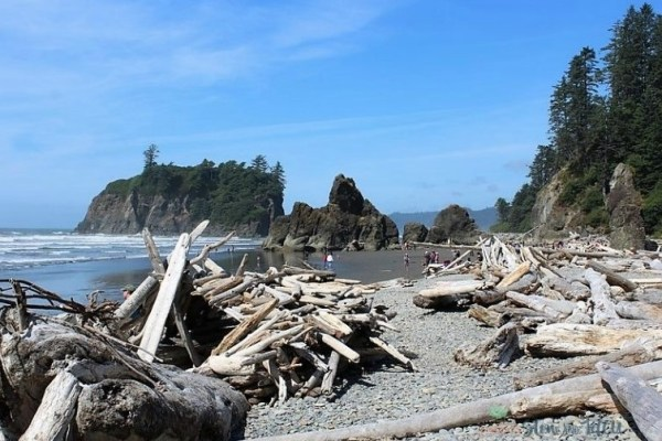driftwood-sea-stacks-olympia-national-forest