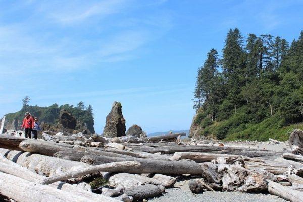 driftwood-sea-stacks-ruby-beach
