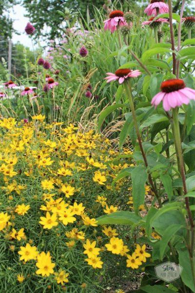 6 tips for starting a diy flower garden  moonbeam-coreopsis-echinacea   stowandtellu.com