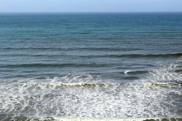 whale-watching-kalaloch-washington