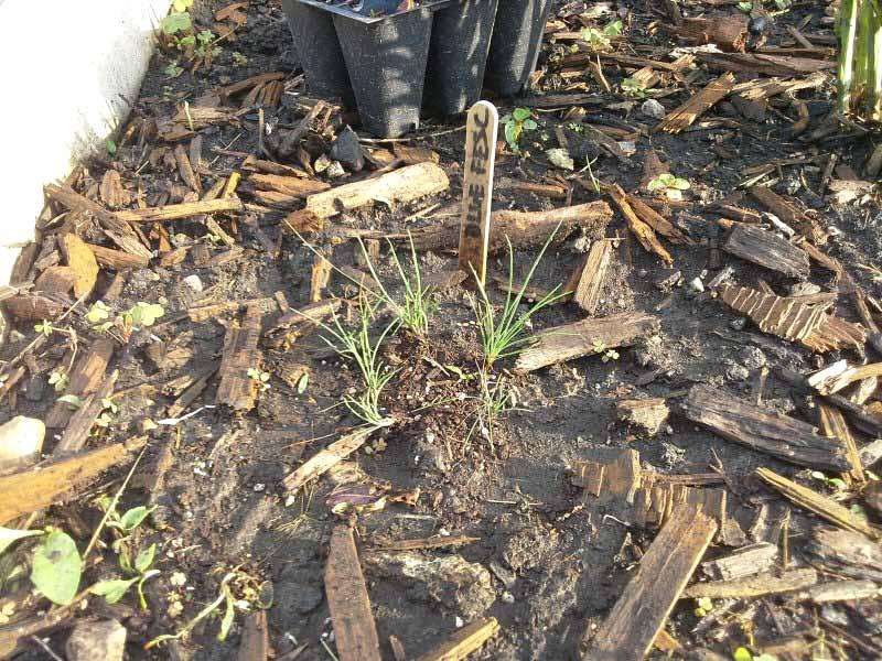 Planting ornamental grass seed | stowandtellu.com