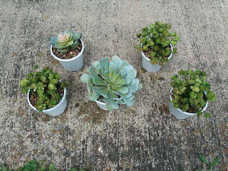 Potting faux succulents with diy gravel glue | Draining the glue from potted faux succulents on the ground | stowandtellu.com