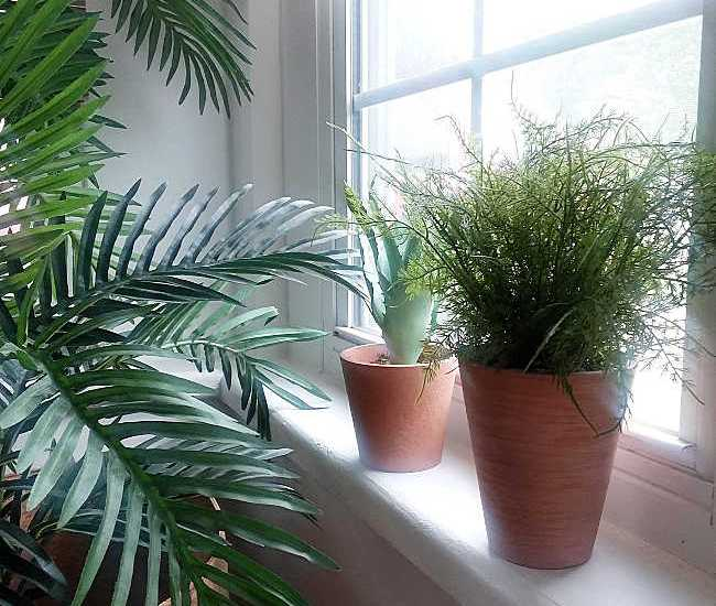 Artificial potted fern and cactus on window sill
