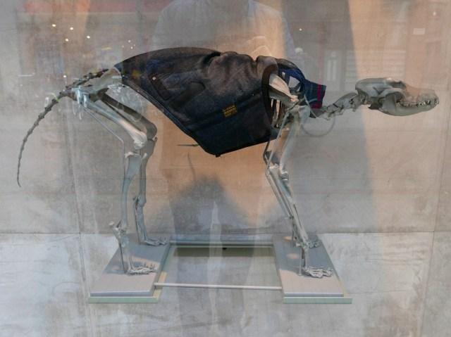 Fashion Dino