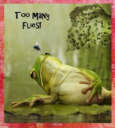 too many flies