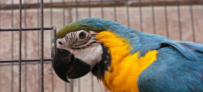 snitching parrot, parrot, bird, pet