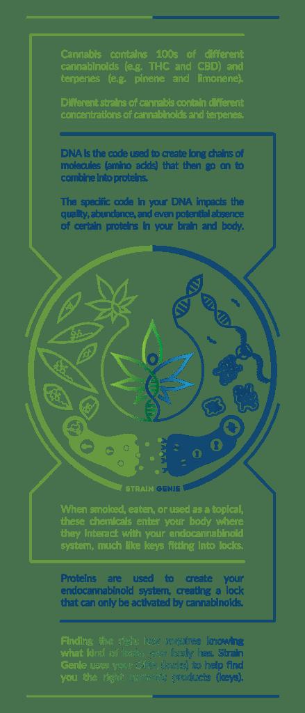 endocannabinoid genes