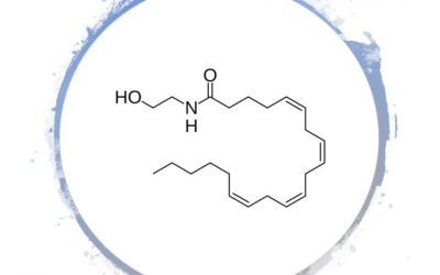 Anandamide: A Critical Neurotransmitter In The Endocannabinoid System