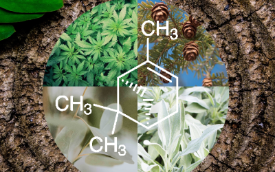 The Alpha-Pinene / Beta-Pinene Terpenes: Strains, Effects, and Benefits