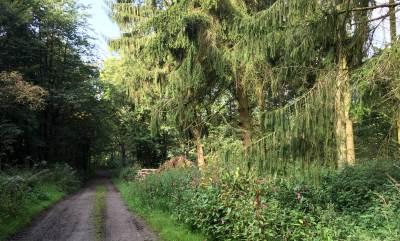 Der Weg nach Volkringhausen