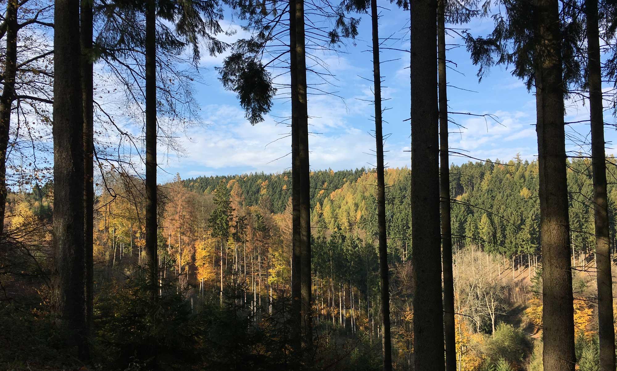 Iserlohner Weg im Balver Wald