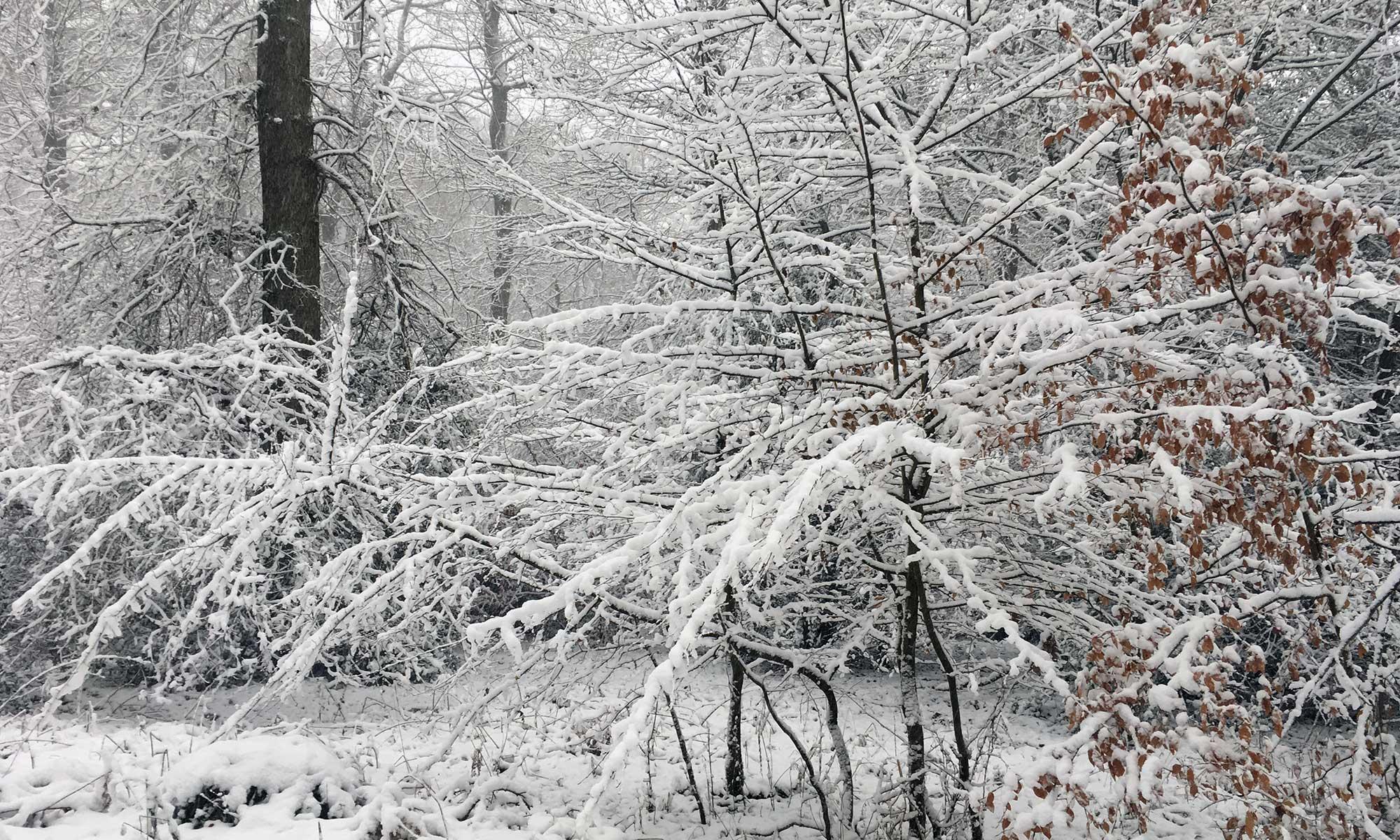 Stille im Scheewald