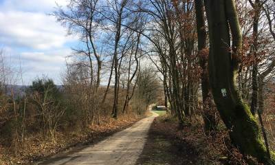 Weg mit Bäumen und Scheune im Hintergrund