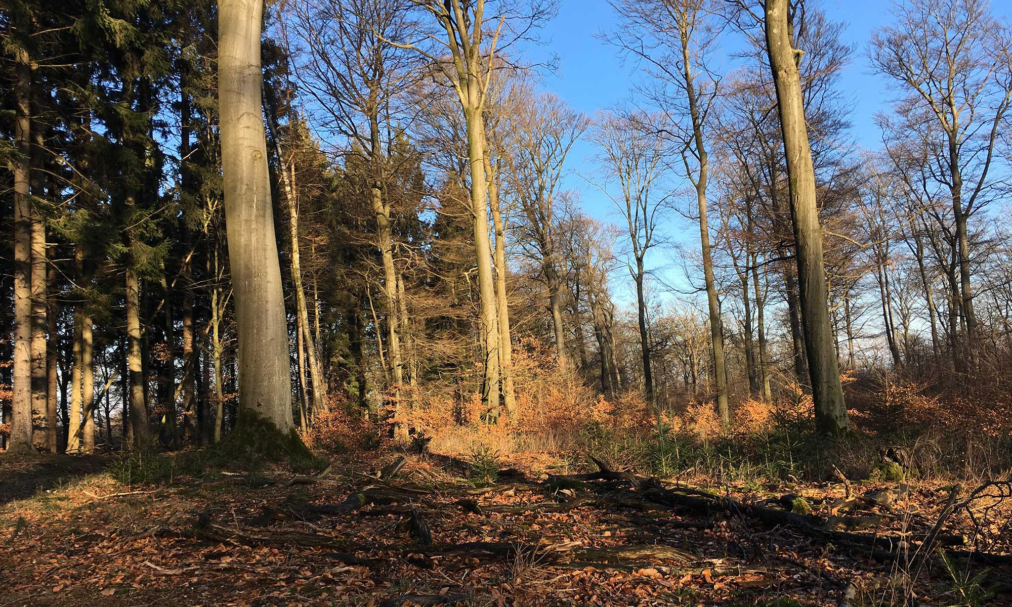 Der sonnige Winterwald