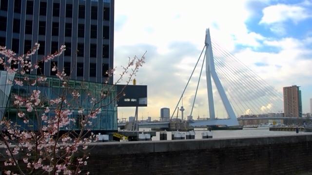 Rotterdam 3
