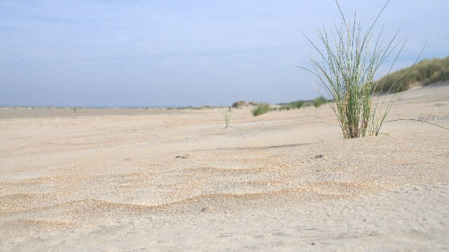 windwelle2 - Paal10 & Ouddorp Strand