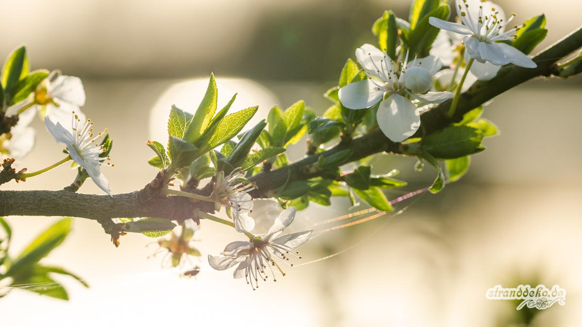 180407 LeukerMeer Frühling 015 - Plötzlich Sommer! Unterwegs im Nationalpark de Maasduinen!