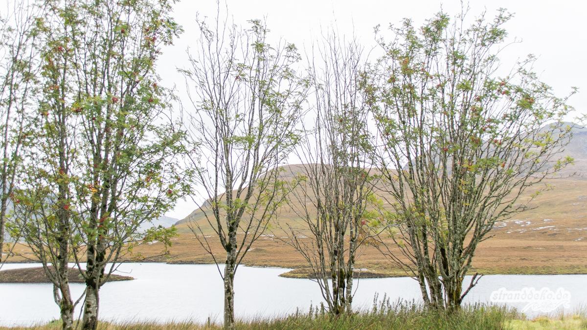 Schottland V 1022 - Schottland - V- Wandertage in Wester Ross