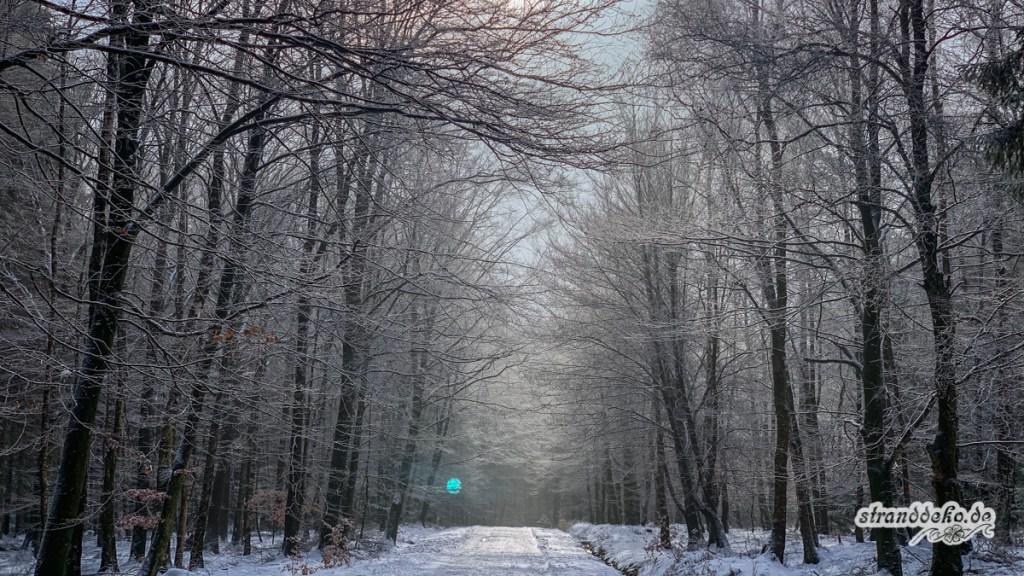 190203 Eifel Schnee 135 1024x576 - Ein Versuch von Winter