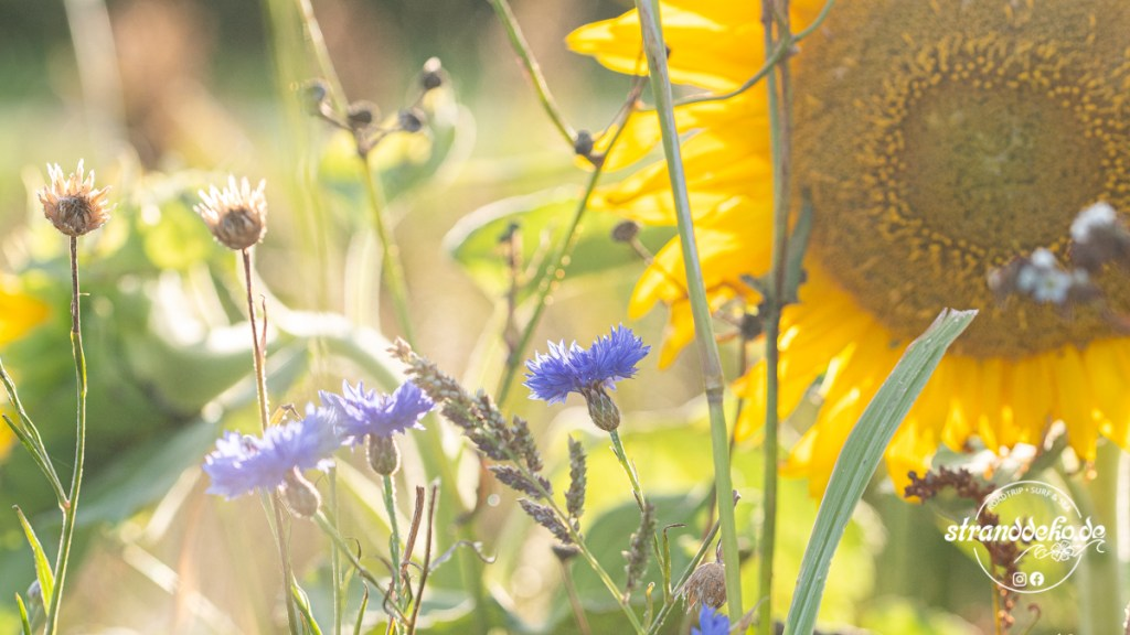 200905 Blumen Kamperland 004 1024x576 - Wingfoil- und Wohnmobiltage am Veerse Meer