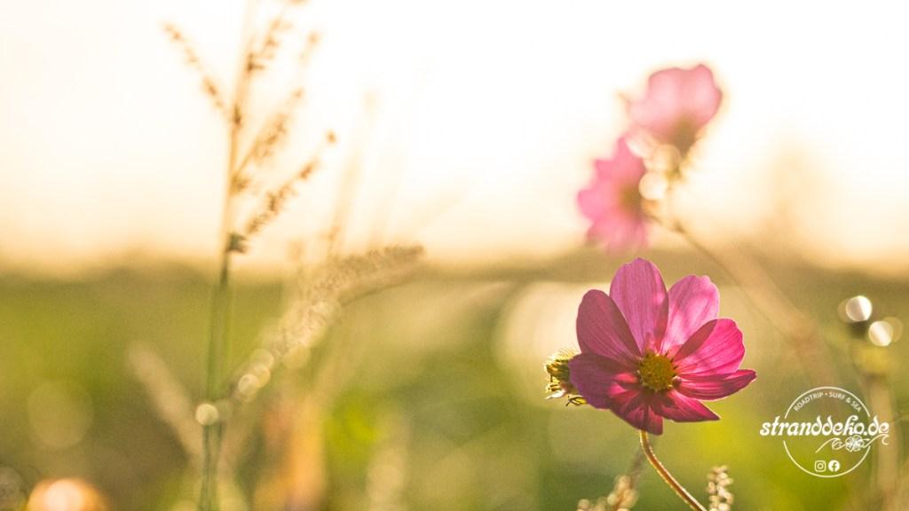 200905 Blumen Kamperland 044 1024x576 - Wingfoil- und Wohnmobiltage am Veerse Meer