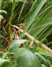 Ein Strandkorb paßt in jeden Garten