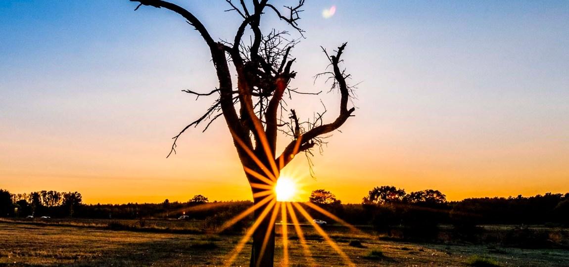 Ein Sonnenstern am Apfelbaum. Die tiefstehenden Septembersonne produziert mit Hilfe der Blende einen schönen Blendenstern oder auch Sonnenstern genannt.