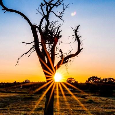 Sonnenstern am Apfelbaum