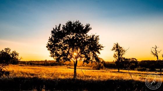 Sonnenstern am Apfelbaum. Oder auch Blendenstern genannt