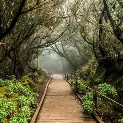Magische Wanderwege im Anaga-Gebirge