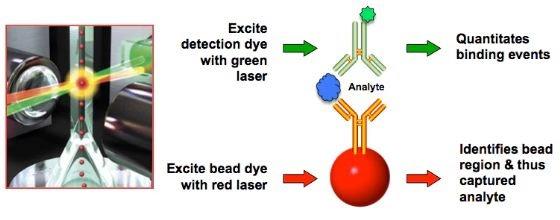 Immunoassay detection scheme