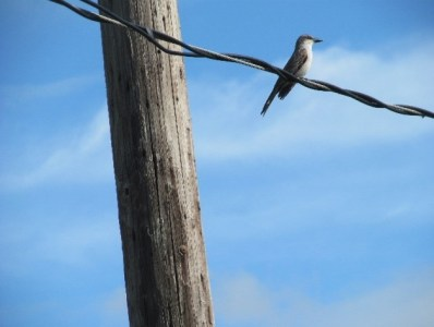 A small bird up on a powerline