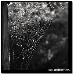 Oh What a Tangled Web We Weave...