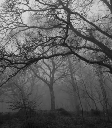 Το δάσος του Epping