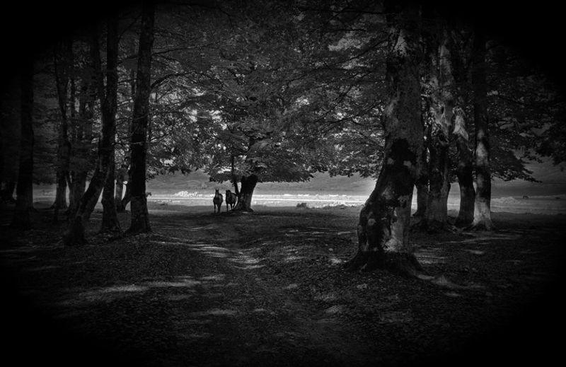 Το ερπετό του δάσους…