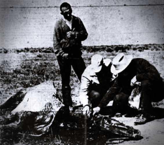 Ο ιδιοκτήτης της Snippy, Harry King, μαζί με δύο γείτονές του, στο σημείο που βρέθηκε το άτυχο ζώο