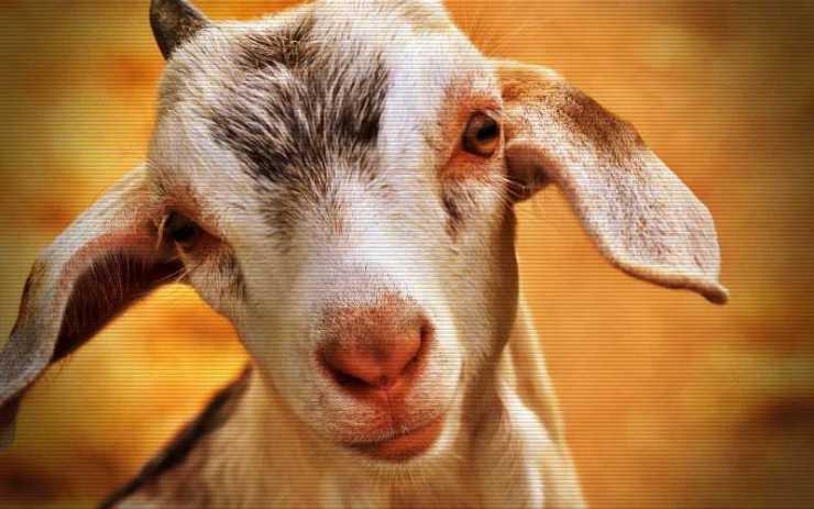 Το οκτάποδο κατσικάκι, που γεννήθηκε από γαϊδούρα, το 1931…