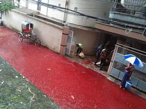 blood red streets dhaka, dhaka streets blood red, Blood red water in the streets of Dhaka after Eid al-Adha 2016, flooded streets dhaka blood red, blood dhaka street, Eid al-Adha 2016, Eid al-Adha 2016 dhaka, dhaka slaughter