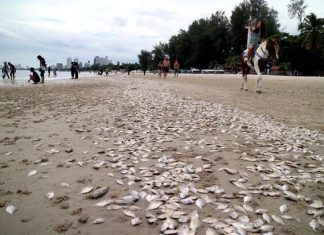 tons of fish die in thailand