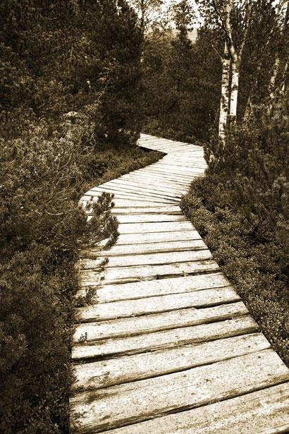 path on peat moor