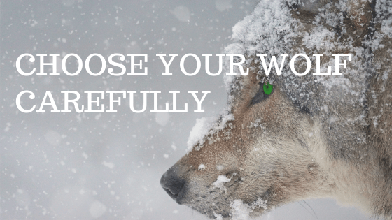 "A snowy wolf with the words ""Choose your wolf carefully"" over it"
