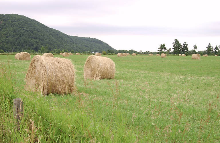 Photo-Field-of-round-bales