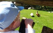 Children love the animals at Mary Arden's Farm - one of the best Stratford-upon-Avon family attractions this summer ©Stratfordblog.com