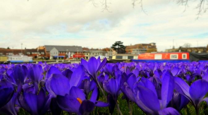 5 reasons to visit Stratford-upon-Avon in spring