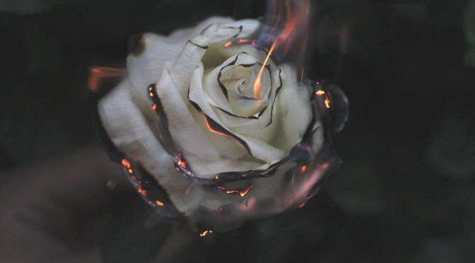 rose burning to illustrate top 5 Shakespeare insults on Stratfordblog