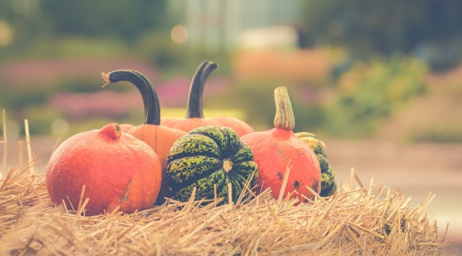 Where to go pumpkin picking in Stratford-upon-Avon