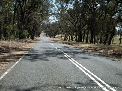 Dappled shade makes it hard to spot lizards and other fauna on the road.