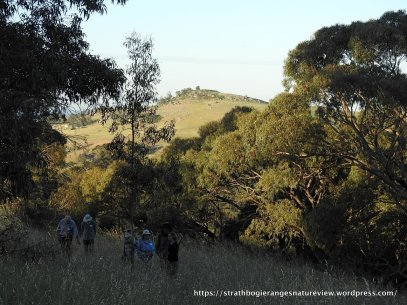 A bare hill-top in the discance contrasts with healthy remnant trees on this property.