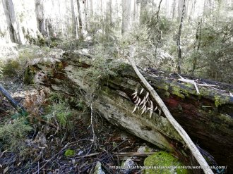 Fungi habitat along Parlours Tk 3. A felled giant from a previous age.