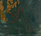 Satellite image of coupes. VicForests' 2006 failed coupe in center of image.